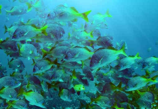 8 BEST COSTA RICA DIVING & SNORKELING SPOTS