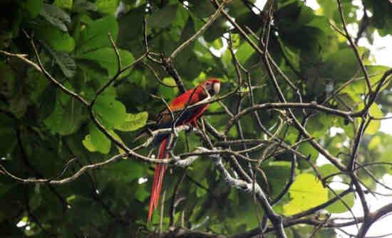 Carara Biological Reserve