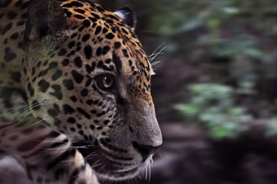 Costa Rican Wildlife To Watch For Costa Rica Experts