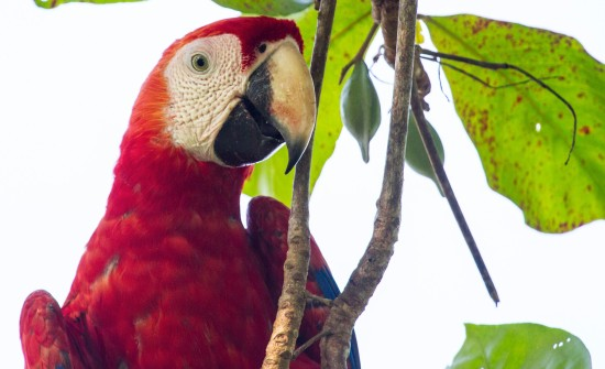 Discover Costa Rica animals and wildlife