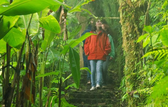 Things to Do at Monteverde Cloud Forest Reserve