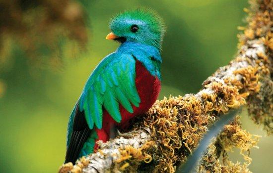 Monteverde Quetzal Birding