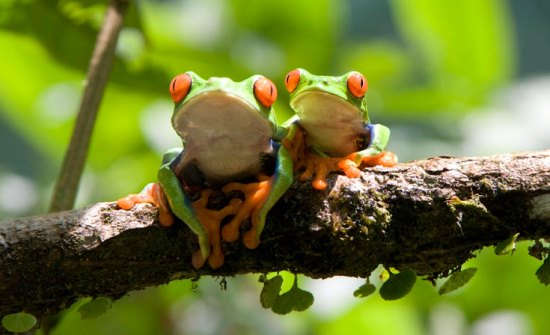 8 Must-See Exotic Costa Rica Animals